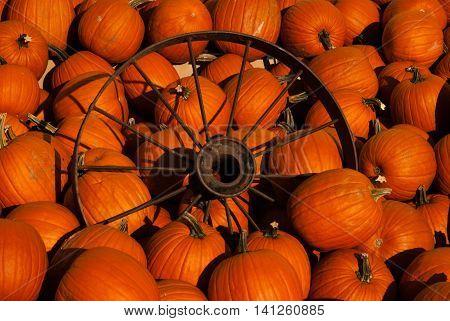 wagon wheel in pile of orange pumpkins