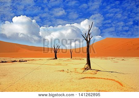 Sossusvlei in Namib Naukluft desert with petrified trees and bright orange sand dunes and a bright blue cloudy sky