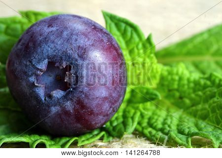 Extreme close up of a blue berry with mint leaf with copy space selective focus