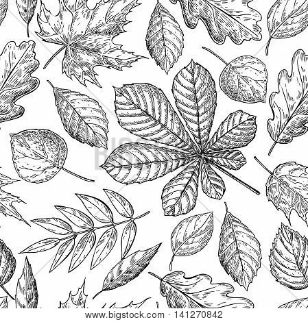 Seamless vector pattern with autumn leaves. Hand drawn detailed botanical background. Oak maple chestnut leaf drawing. Vintage fall seasonal decor.