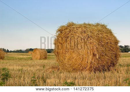 Dry hay stacks countryside field during harvest time