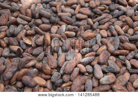 A Variety of Cacao Beans Drying in the Sun