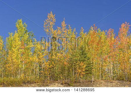 Fall Colors in the Taiga in interior Alaska