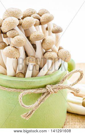 The fresh brown beech mushrooms (Hypsizygus marmoreus)