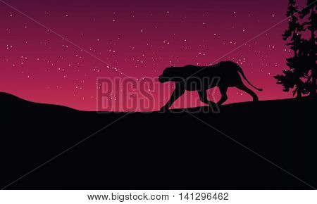 Lion at night scenery silhouettes on red sky