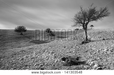 Black and white image of a desert land with trees and a body of a dead goat animal resting on the ground.