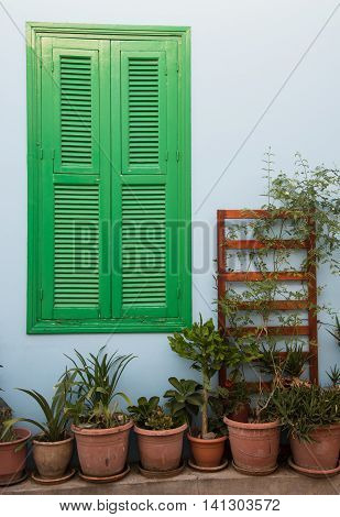 Vintage Green closed wooden window and various decorative garden plants on the backyard