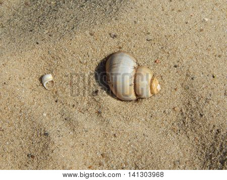Snail in the sand in beach, sand, background, sea