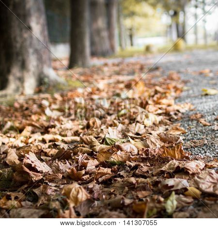 Sentimental view on fallen autumn leaves on the asphalt. Alley with a trees as a background.