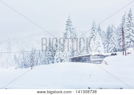 Rural winter scene. Snow covered snowy trees on rural background