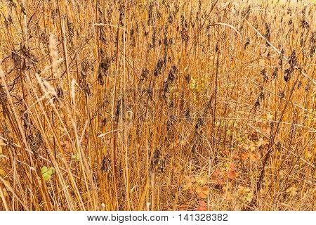Colorful Autumn Wild Bushes