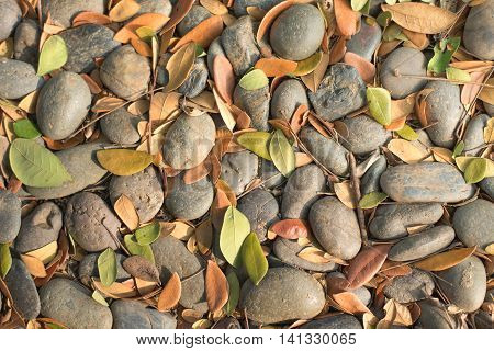 A Small Rocks and dry leaf in the garden.
