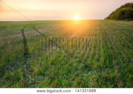 Sunsrise over green field with road which leading through the field