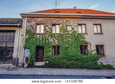 Mikulov Czech Republic - May 17 2015. Green ivy on th tenement house at Konevova Street in small Mikulov city in South Moravian Region