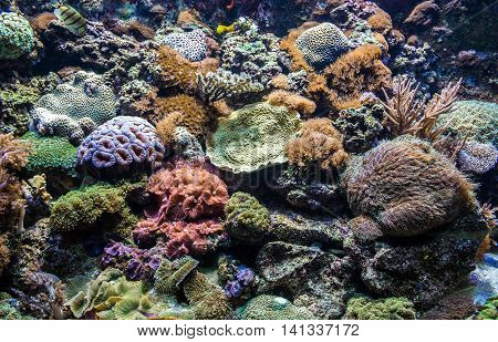 lot of Tropical corals in large saltwater aquarium