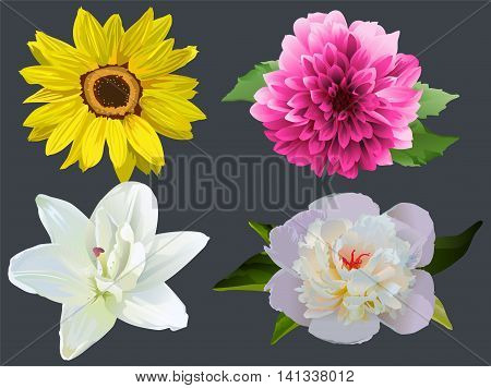Set Flowers on black background. Sunflower, dahlia, white lily and peony. Illustration in vector format