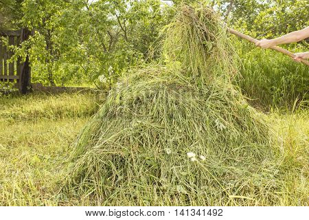 Person holding in his hands the old pitchfork and adds the dry grass in the haystack in the vegetable garden against a background green bushes and a fence