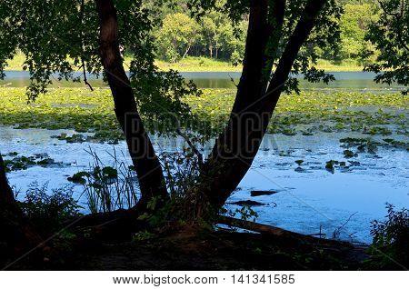 woods surrounding crosby lake of crosby farm regional park in saint paul