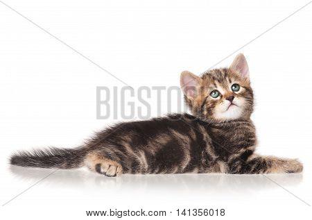 Serious little kitten isolated on white background cutout
