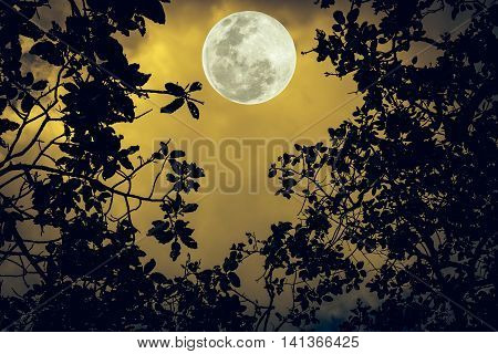 Silhouette The Branches Of Trees Against The Night Sky In A Full Moon. Outdoors.