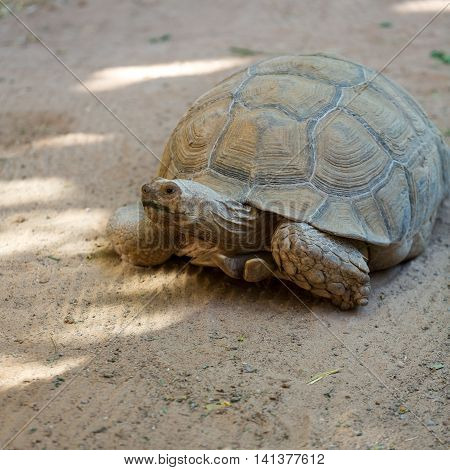 Giant tortoises in Oasis Park on Fuerteventura Canary Island