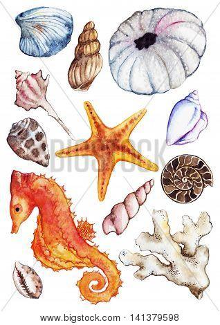 Watercolor sea ocean seahorse seashell coral ammonit urchin set