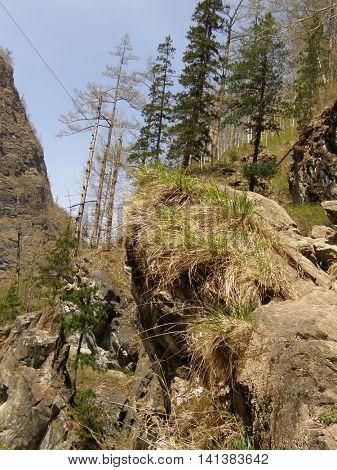 Spring Taiga. Arshan. Buryatia. Siberia. Russia.