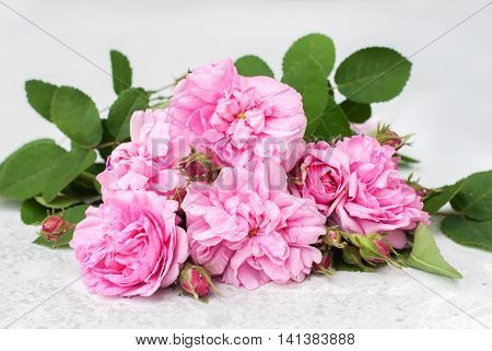 Dog Rose Pink Rosa Canina Flowers Grey Table