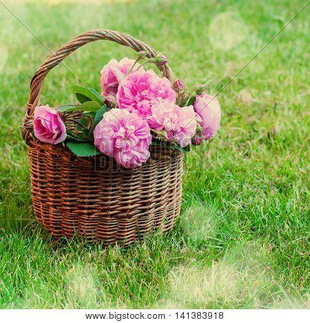 Dog Rose Pink Rosa Canina Flowers Basket
