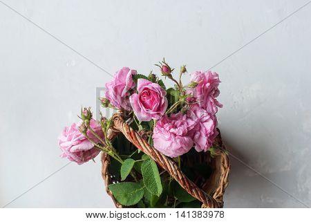 Dog Rose Pink Rosa Canina Flowers Bouquet Basket