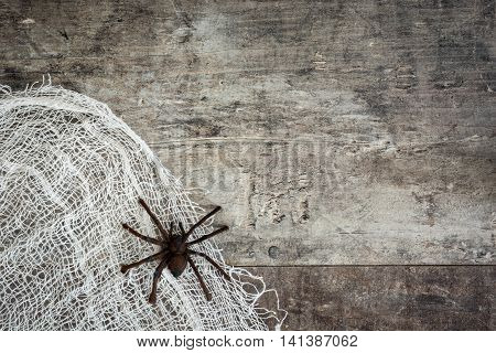 Halloween background: Spider and cobweb on rustic wooden background