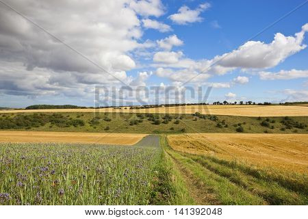 Farm Track With Scenery
