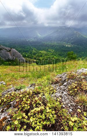 Mountain landscape with green trees and grass. Foggy morning. Russia.
