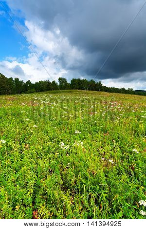 Forest glade under blue sky and clouds. Green meadow with flowers and grass. The trees in the background.