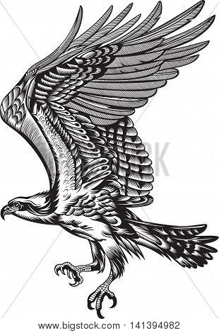Wild Predatory Bird, black and white illustration