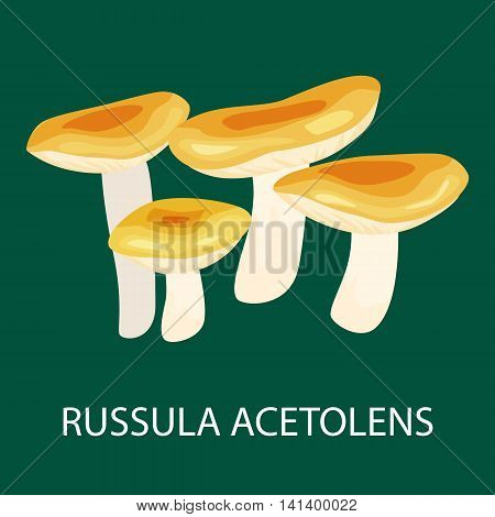 Russula Acetolens isolated, Wild Foraged Mushroom, Vector isolated edible natural mushrooms in nature set, organic vegetable food collection.