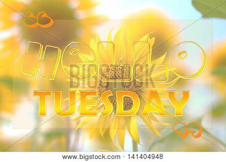 Hello Tuesday, Wednesday, Friday, Saturday  on sunflower background