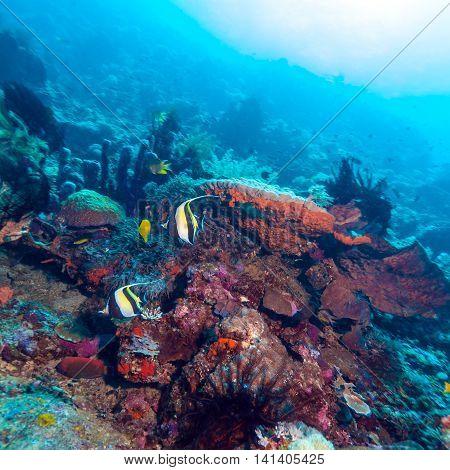 Moorish Idols And Sea Bottom Of Ecosystem