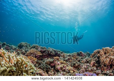 Underwater sunlight and coral garden in Miyakojima island