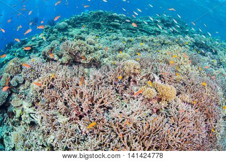 Beautiful coral reef and fishes in Miyakojima Island