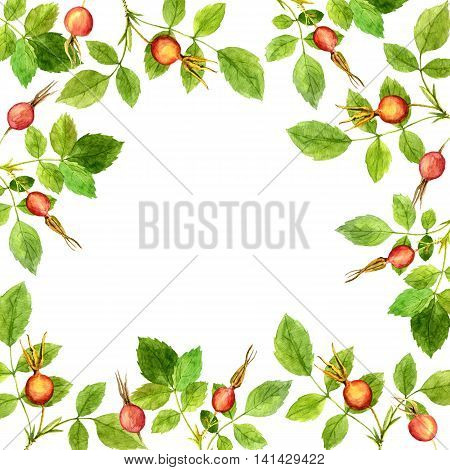 floral frame with watercolor branches of briar with green leaves and orange and red berries, hand drawn illustration, painting summer background