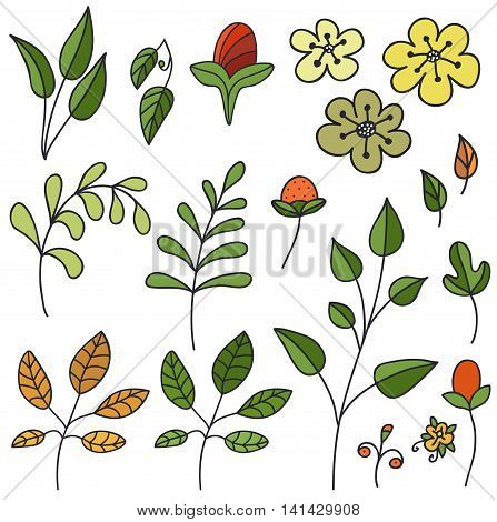 Hand drawn floral set. Isolated. Vector illustration