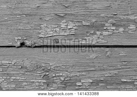 old texture of a peeling of the wooden board painted in the gray color for abstract background