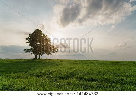 oak and maple grow together on green field in sunset light