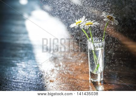 Daisies in a glass vase in the sun and splashing water on a wooden background