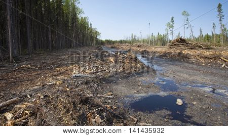 Mud and water at a logging site in Saskatchewan Canada