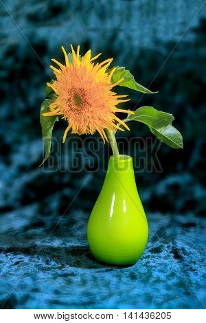 Flower Picture  Sunflowers In A Vase On A Blue Background