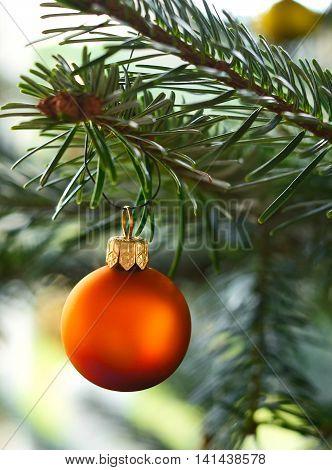 Christmas tree ball hanging on the christmas tree. close-up.