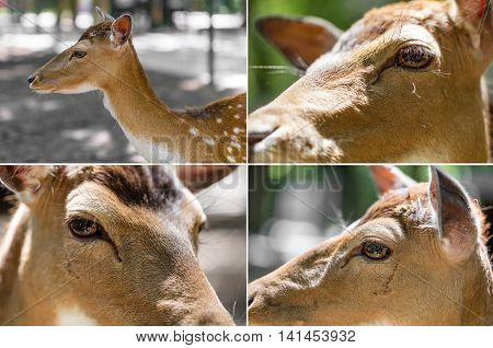 collage of four pictures deer head close-up