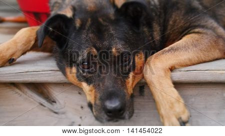 Mixed breed dog resting on a porch.